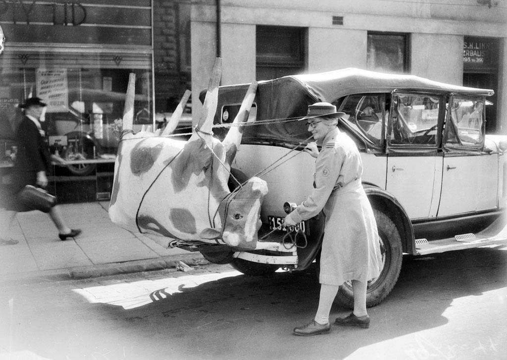 Vintage photo: Papier-mache cow in Australia, 1944